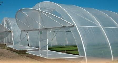 Як здійснюється будівництво теплиці за голландською технологією