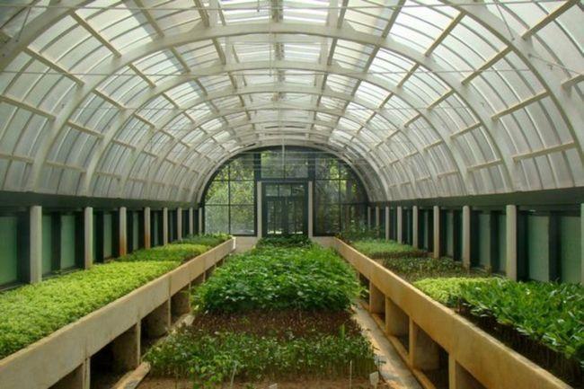 Голландські технології в будівництві теплиць дозволяють не турбуватися про те, чи виросте урожай і як зберегти тепло в спорудженні