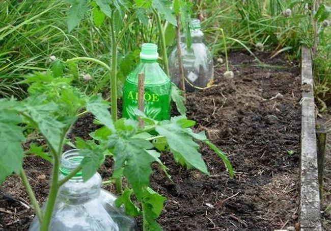 Полив через пластикові ємності малими дозами води багатьма рослинникам визнається дуже ефективним способом