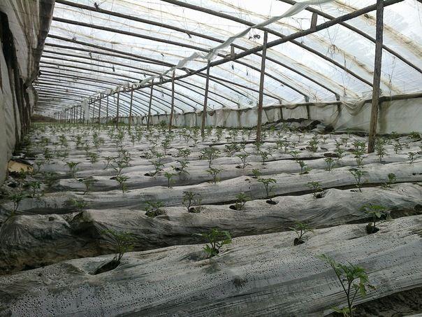 Китайці, як справжні знавці сільського господарства, знайшли універсальну конструкцію теплиць
