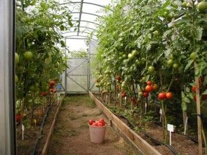 Обігрівачі для теплиць з полікарбонату - відмінний спосіб отримувати підвищені врожаї