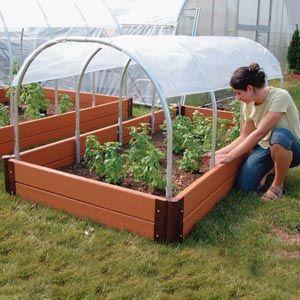 Будівництво парників для помідорів: розсада в захищеному грунті